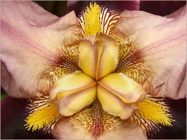 2ème jour - L'Alchimiste du Bonheur - Page 3 Fleur_iris_coeur