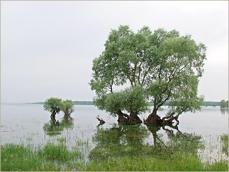 Arbres sur le lac du der (marne/haute marne)