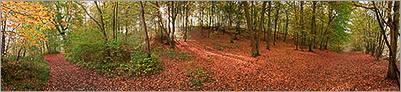 Sous-bois en parure d'automne en forêt de Chantilly (CANON 5D + EF 24mm L)